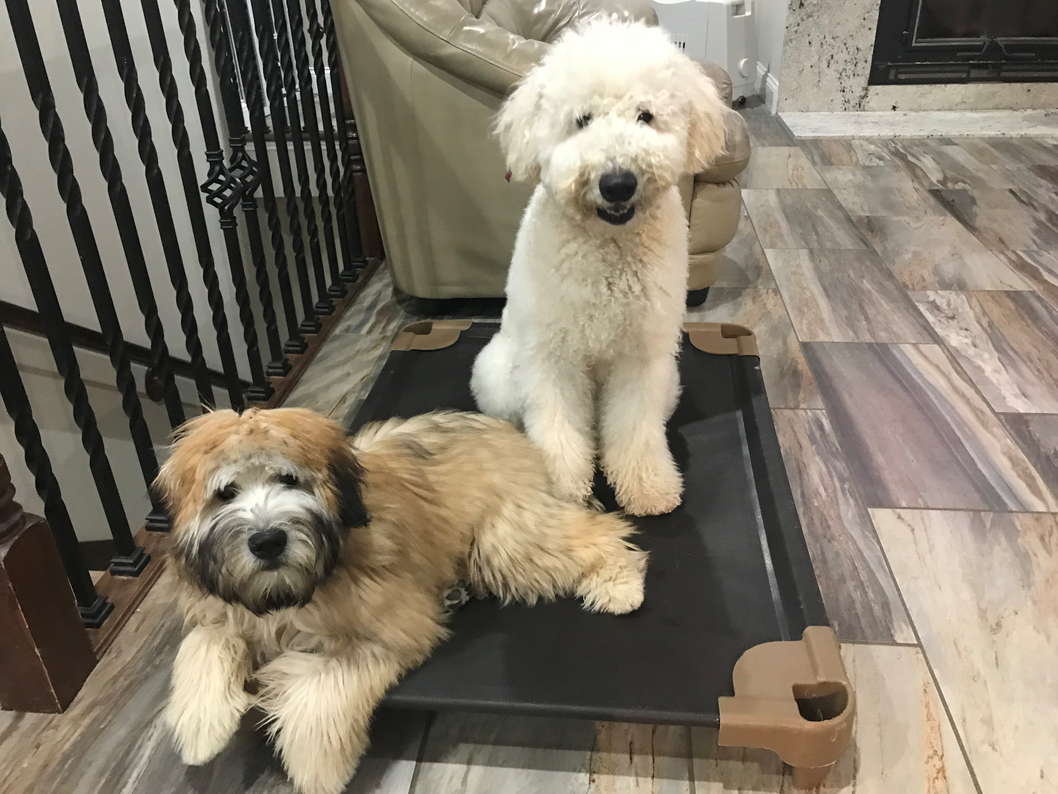 THERAPY DOGS FOR SALE - K9 Kamp Dog Training